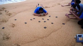 Turtle Conservation Adoption at Penang National Park