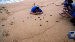 Turtle Conservation Adoption at Penang National Park