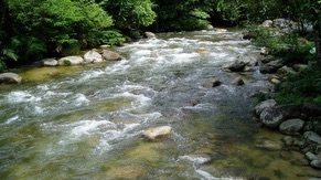 Kulim Sedim National Park River