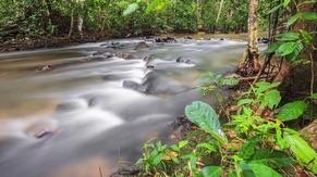 Kulim Ulu Pipe Rainforest Reserve