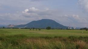 Padi Field
