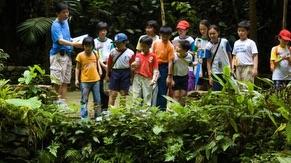 Voluteer Program Walk In Nature