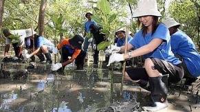 Voluteers planting mangroves saplings