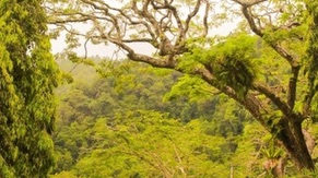 Penang Botanical Garden Tour