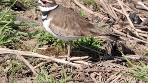 The flora surrounding the wetlands provides habitat for wildlife.